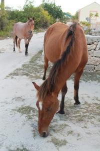 GT horses